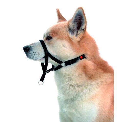 Collar de manejo para perros que tiran