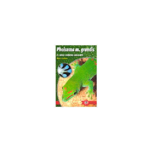Phelsuma madagascariensis Geco Diurno Gigante