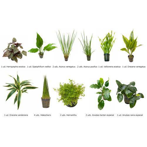 .Plantas Naturales para Acuarios Combo 15