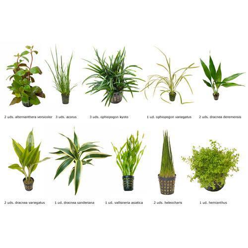 Plantas Naturales para acuaterrario Combo 7