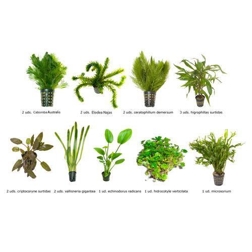 .Plantas Naturales para Acuarios Combo 5