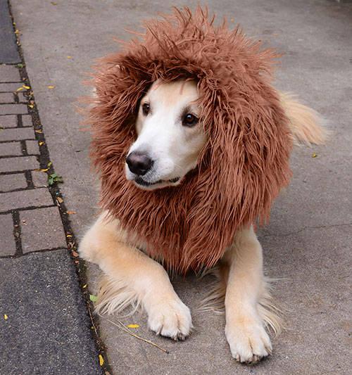 Peluca para perros color marrón 40 cm