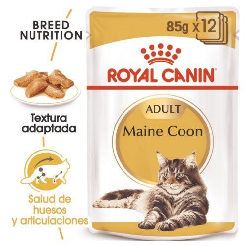 Royal Canin Maine Coon comida húmeda para gato adulto
