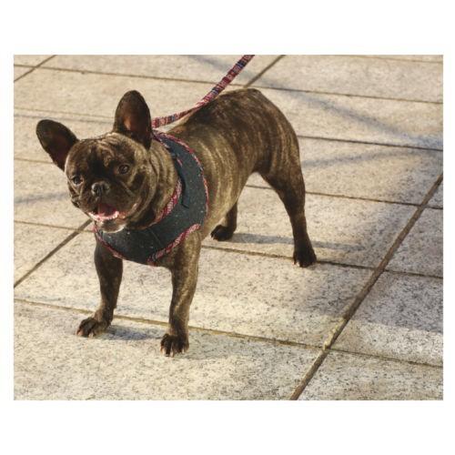 Abrigo con arnés Peru para perros