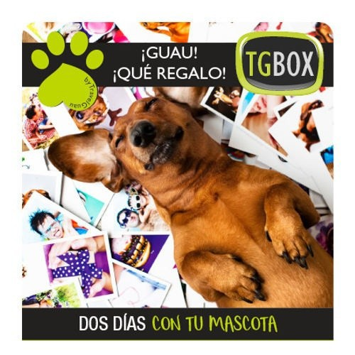 Experiencias para perros TGBOX: dos día con tu mascota