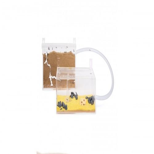 Kits hormiguero acrílico pequeño para pared