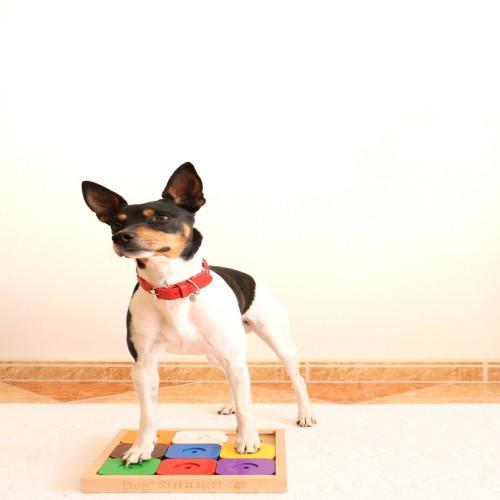 Juguete inteligente para perros Sudoku Rainbow