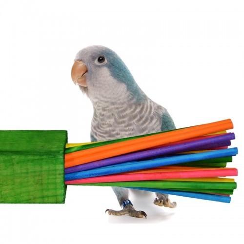 Taco Paper party para loros color Variado