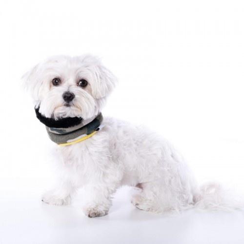 Cuello Uoamy para perros color Camuflaje