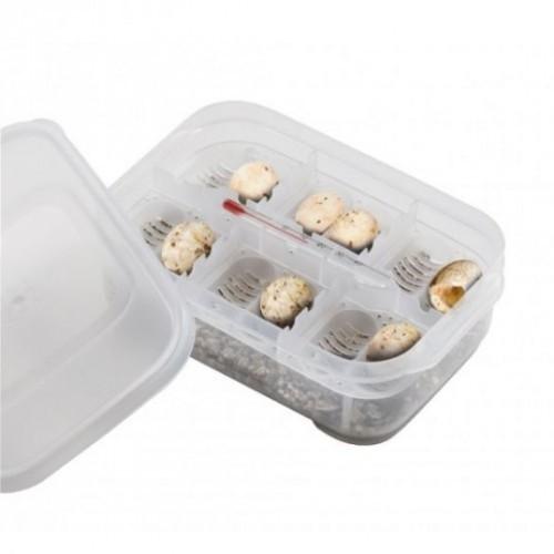 Caja de incubación de reptildes