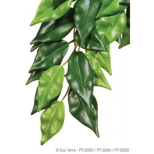 Planta de seda Ficus para reptiles