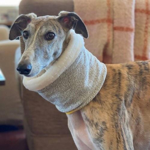 Bufanda Uoamy Reversible para perros color Gris