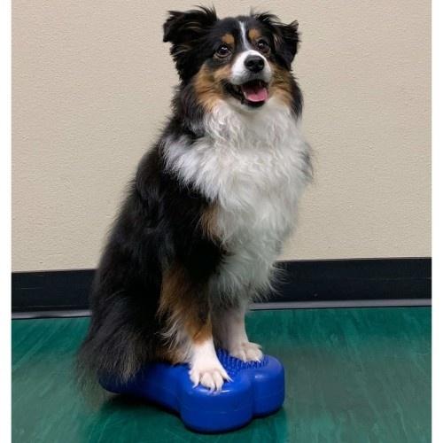 Plataforma de equilibrio para mascotas color Azul