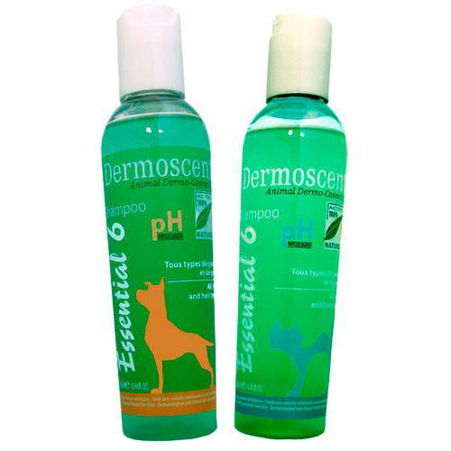 Dermoscent Champú fisiológico sin jabón para gatos
