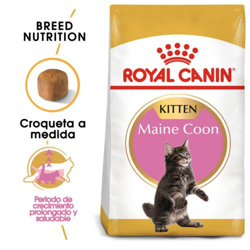Royal Canin Kitten Maine Coon pienso para gatito