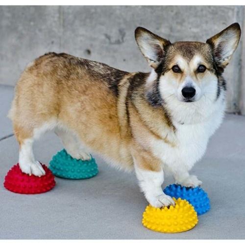 Accesorio de equilibrio de patas para perros