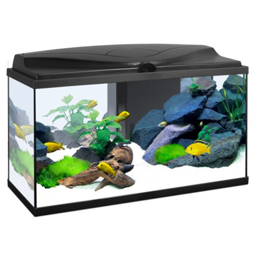 Acuario Ciano Aqua 80 light