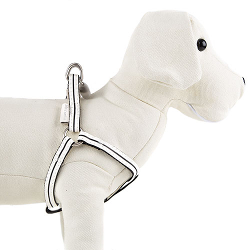 Arn/és Robot Blanco