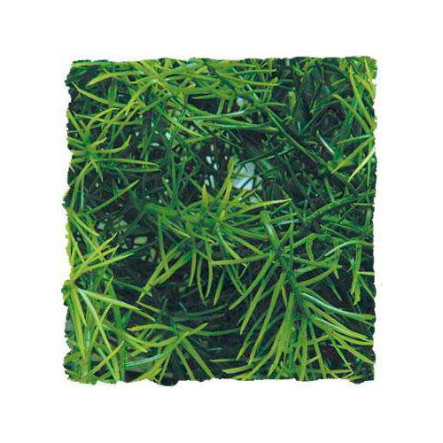 Plantas artificiales: Casuarina