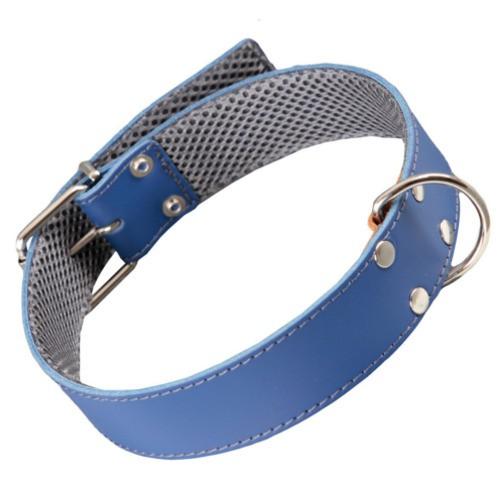 Collar de cuero azul con forro interior para perros