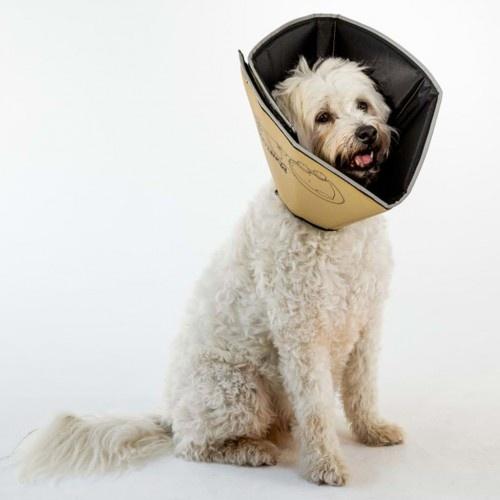 Collar médico para mascotas color Beige