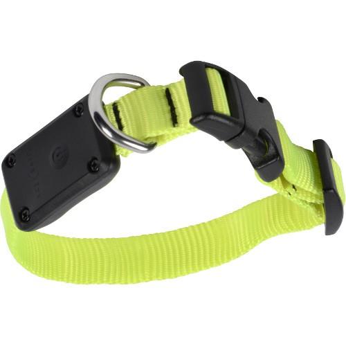 Collar LED para perros NiteDawg amarillo