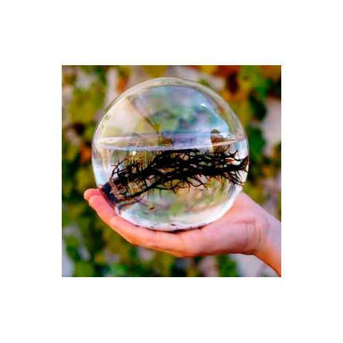 Large round Ecosphere