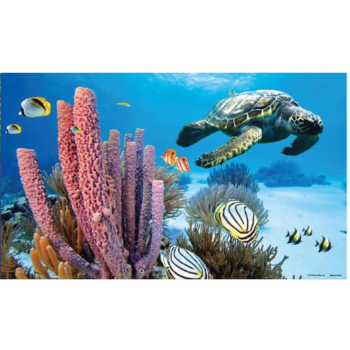 Fondo en 3d para acuarios p ster marino tiendanimal for Acuario tortugas