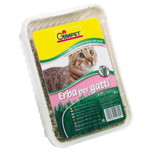 GimPet hierba para gatos en bandeja