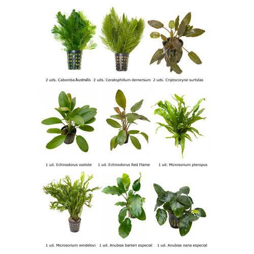 Plantas naturales para acuarios combo 9 tiendanimal for Acuarios ornamentales