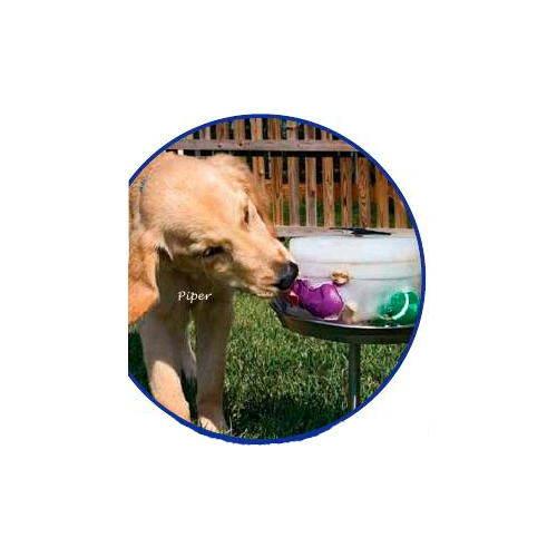 Kool Dogz Ice crea un juguete personalizado congelado para perro
