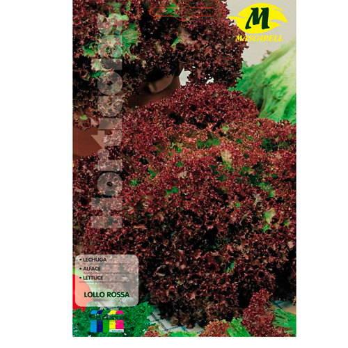 Lechuga Lollo Rosso 12x19 cm Mascarell Semillas