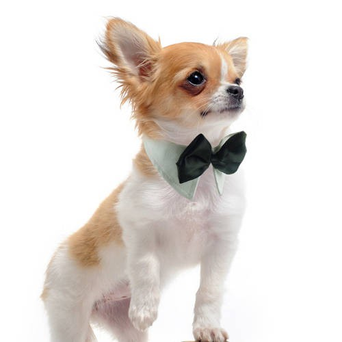 Pajarita para perros y gatos tk pet elegance tiendanimal for Estanque para perros