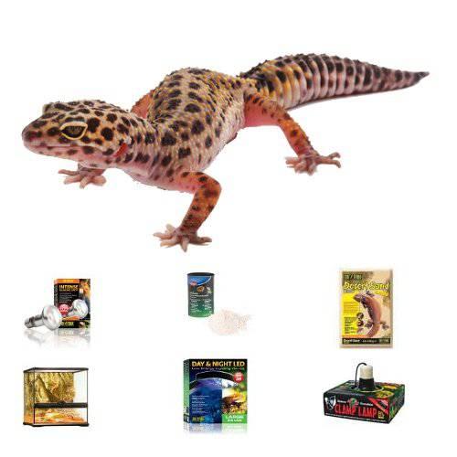 Kit completo para Gecos Leopardo