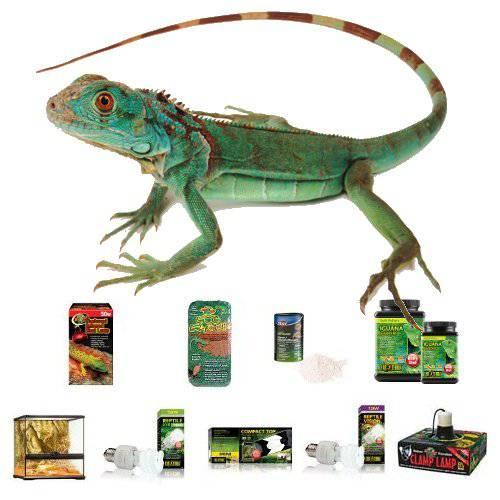 Kit completo para Iguanas
