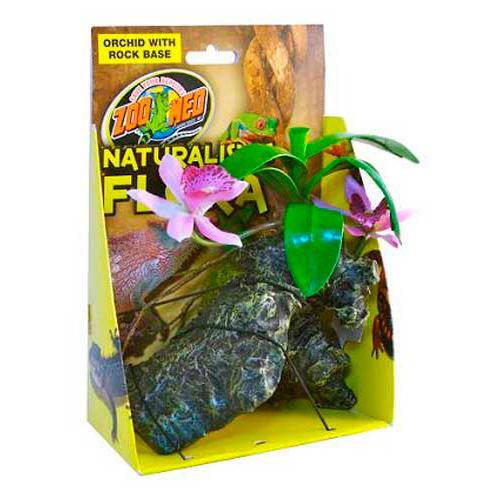 Naturalistic flora: Orquidea