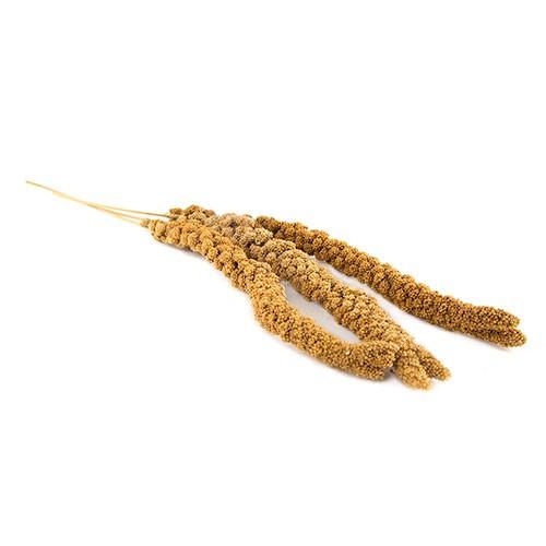 Panizo amarillo en espiga a granel