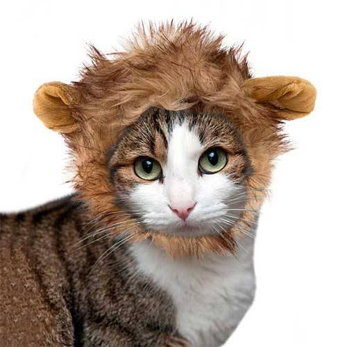Peluca para gatos color marrón 16 cm