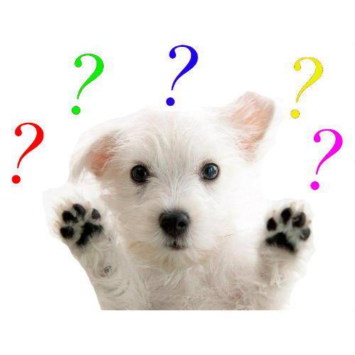 Identifica la raza de tu perro con una prueba de ADN