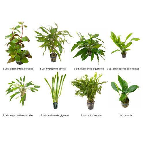 plantas naturales para acuarios combo 2 tiendanimal