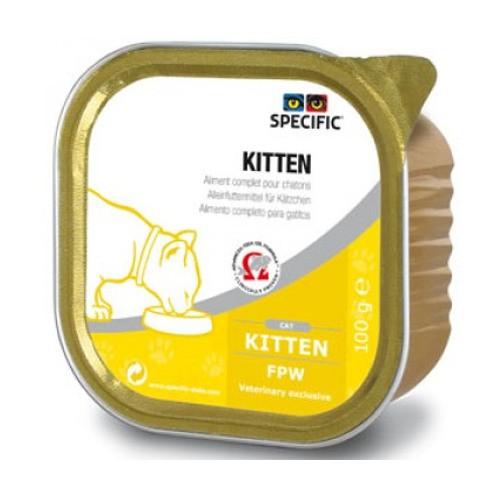 Specific Feline FPW Kitten