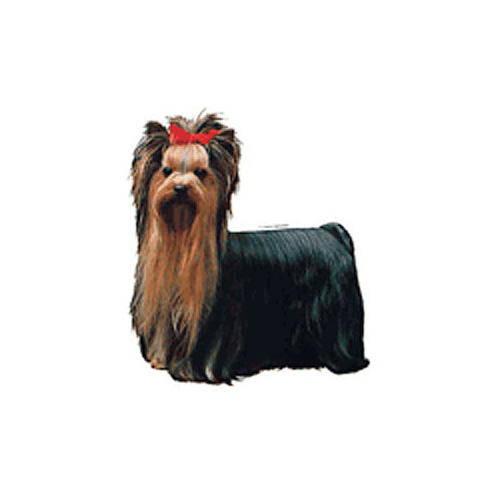Pegatinas y llavero: Yorkshire terrier