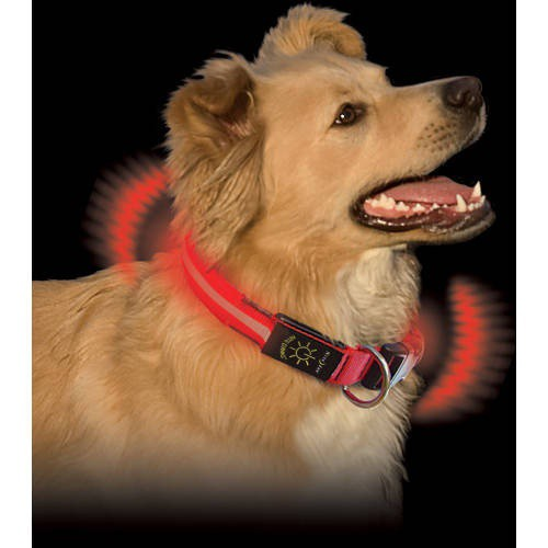 Collar led para perros nitedawg rojo tiendanimal for Estanque para perros