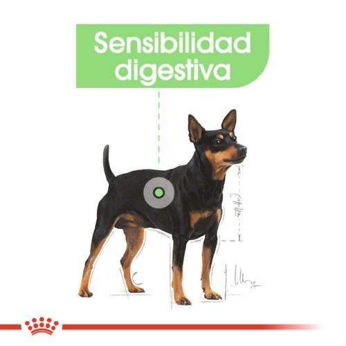 Royal Canin Mini Digestive Care pienso para perros mini