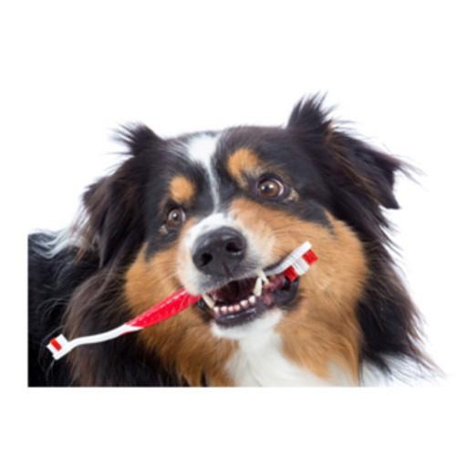 Cepillo dental para perros y gatos