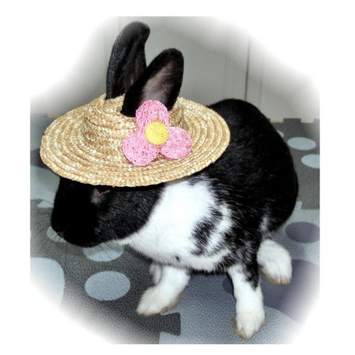 Edible straw hat for rabbits