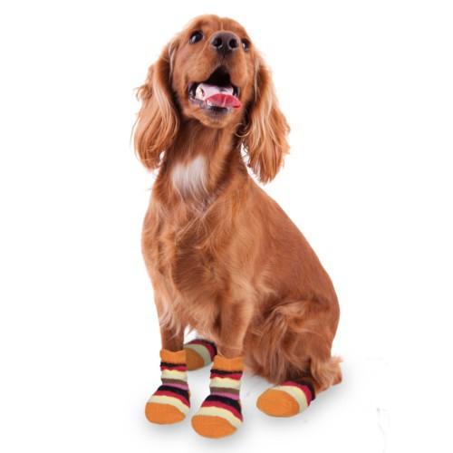 Calcetines para perros multicolor
