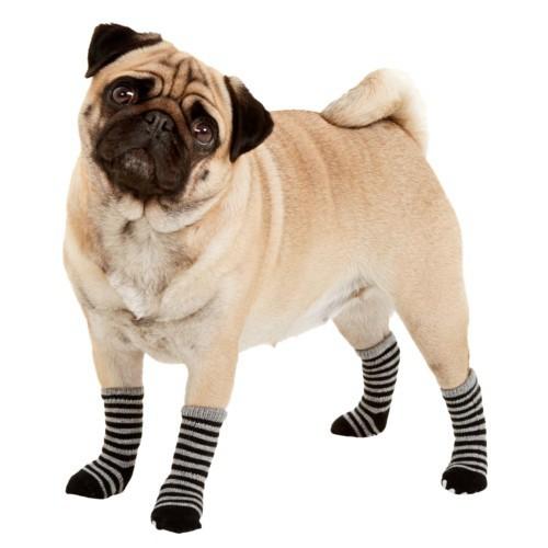 Calcetines para perros negro y gris