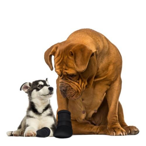 Bota protectora para perros