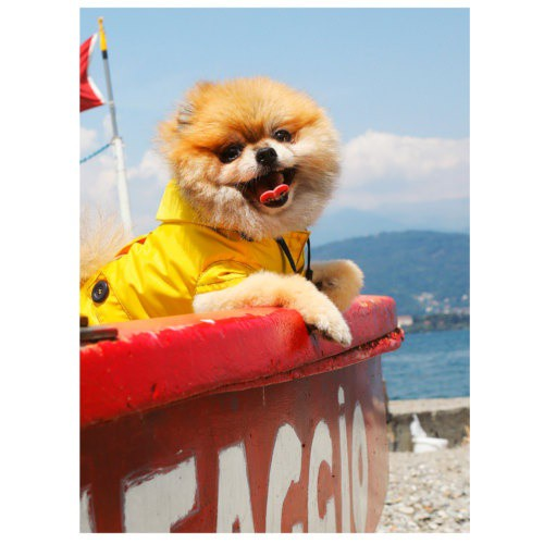 Chubasquero marinero para perros